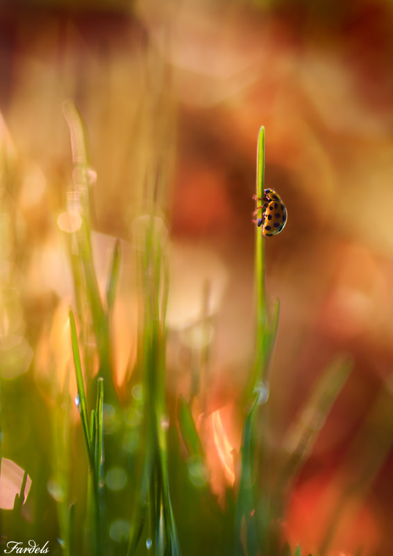 Photograph Ladybug on Forest Fire by Jorge Fardels  on 500px