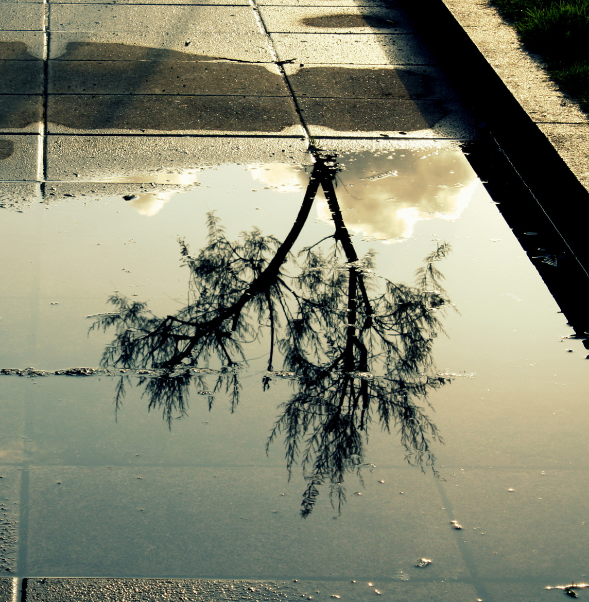 Photograph Reflection by Raquel Camurasiquel on 500px