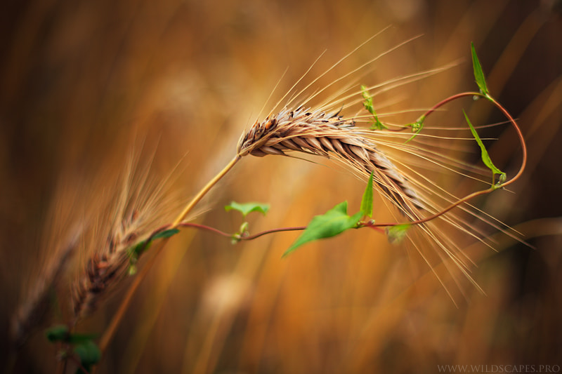 Photograph Vegetal Embracement by Maxime Courty on 500px