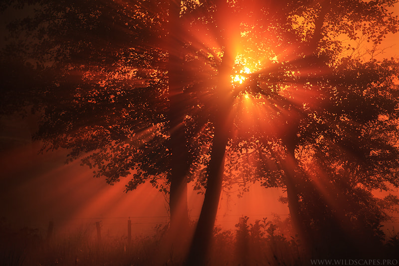 Photograph Epic Sunrays by Maxime Courty on 500px