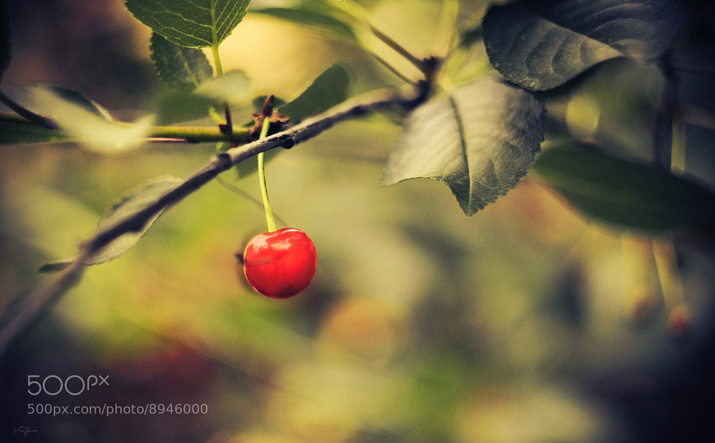 Photograph Cherry by Vika Rybina on 500px