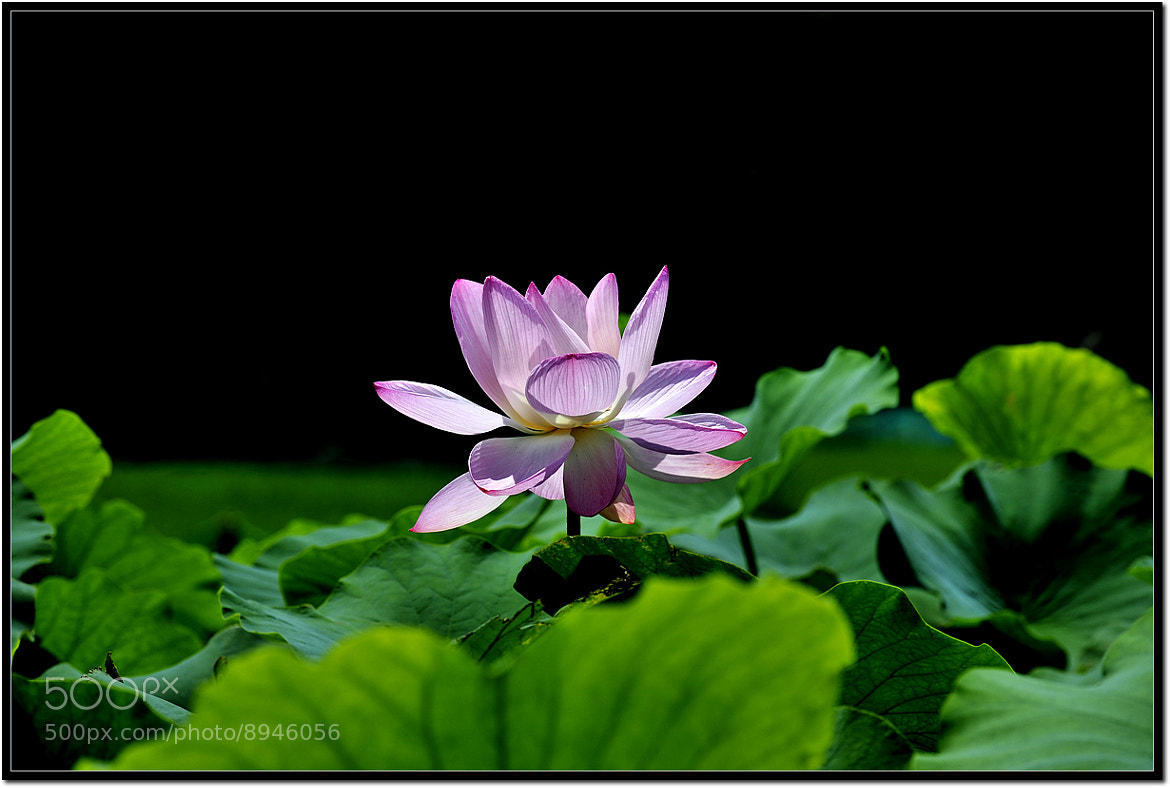 Photograph 홍연 by Cho Han Ho on 500px