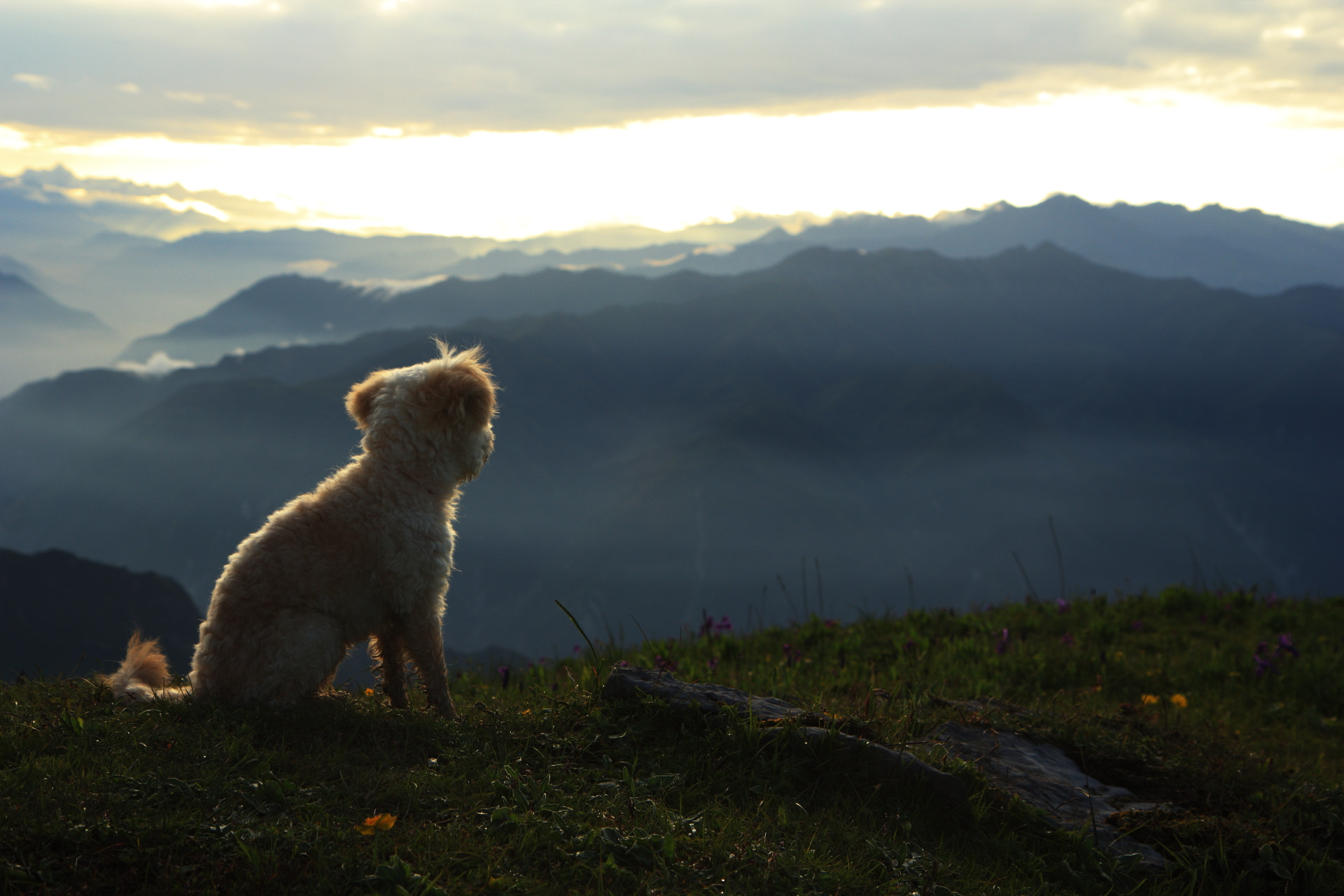 Photograph A dog on Jiuding Mountain  by 铁汤  on 500px
