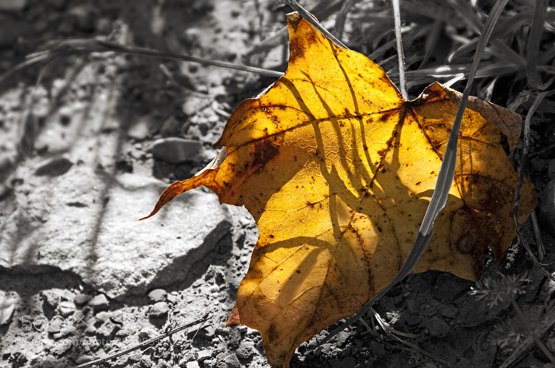 Photograph autumn flames by Josh Carey on 500px