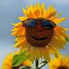 Happy face¬