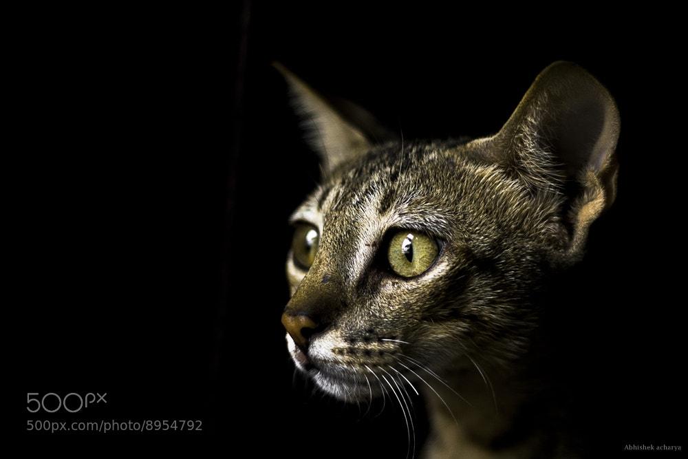 Photograph cat by abhishek Acharya on 500px