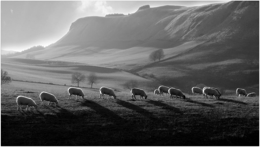 Photograph Grazing Sunshine in the Sidlaw hills by eric niven on 500px