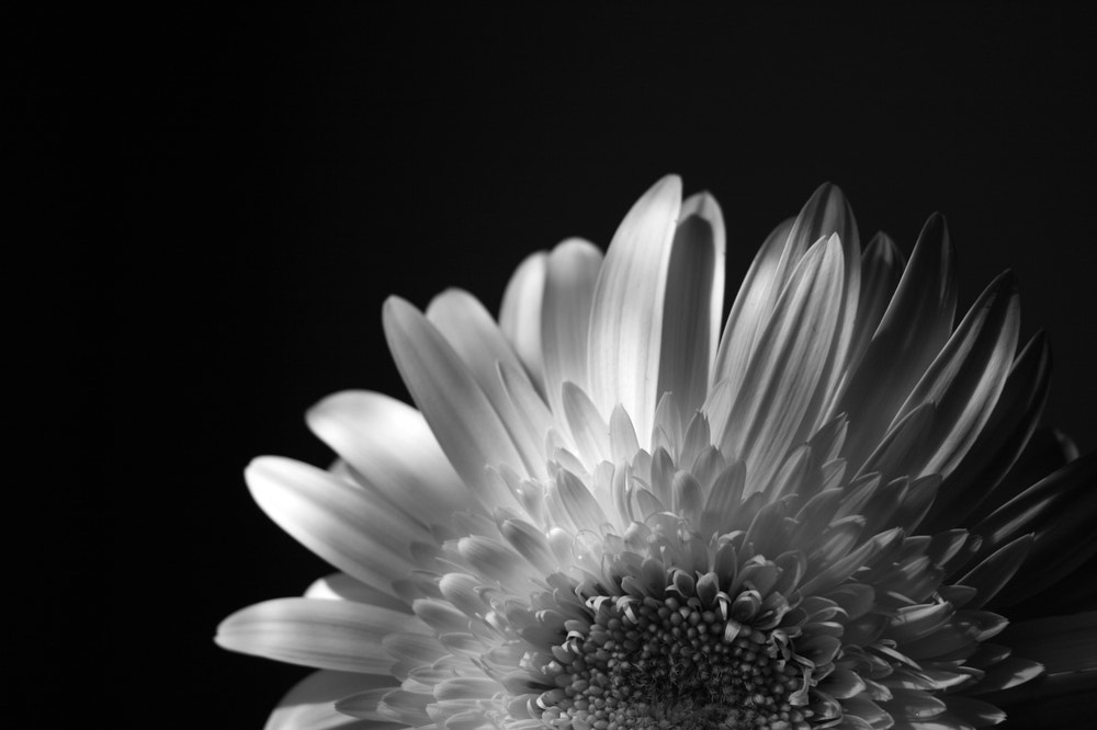 Photograph Lights and Shadows by Lucia Brancati on 500px