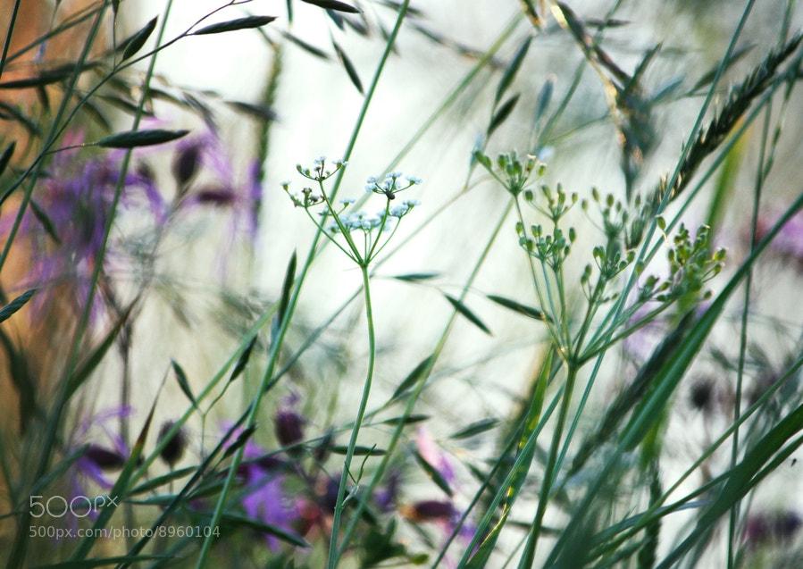 Photograph *** by Olga Strogonova on 500px