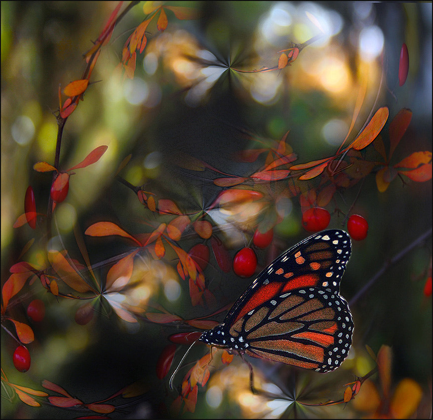 Photograph Autumn's butterfly by Alla  Lora on 500px