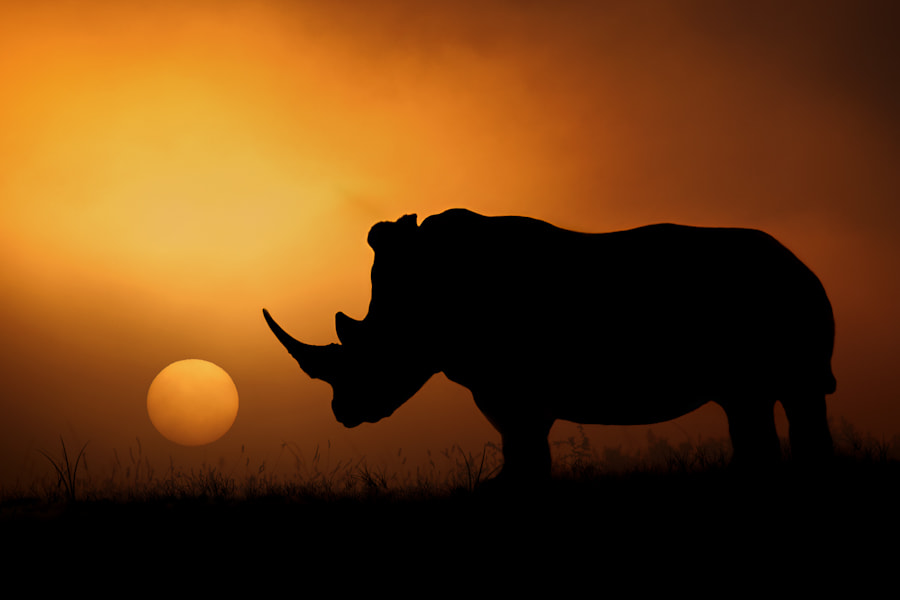 The Rhino Sunrise by Mario Moreno on 500px.com