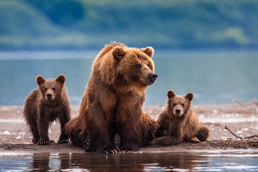 Photograph Family portrait in the open air by Sergey Ivanov on 500px