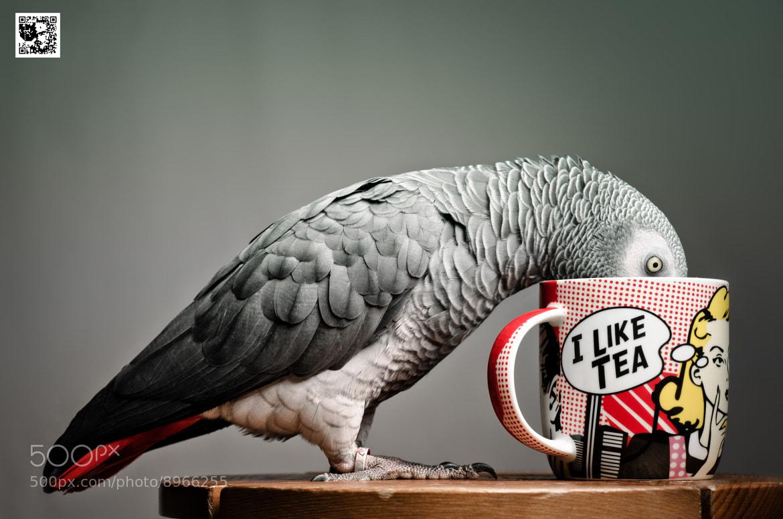 Photograph I like Tea by Paul Monaghan on 500px