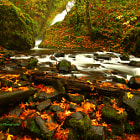 Постер, плакат: Fall Leaves and Bridal Viel Creek From Bridal Veil Falls State P