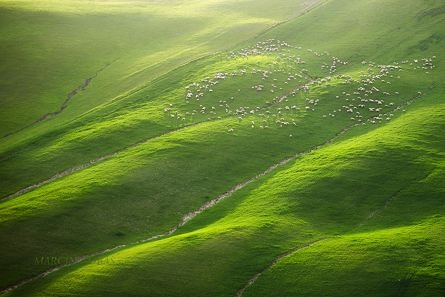 Photograph Sheeps and two goats by Marcin Sobas on 500px