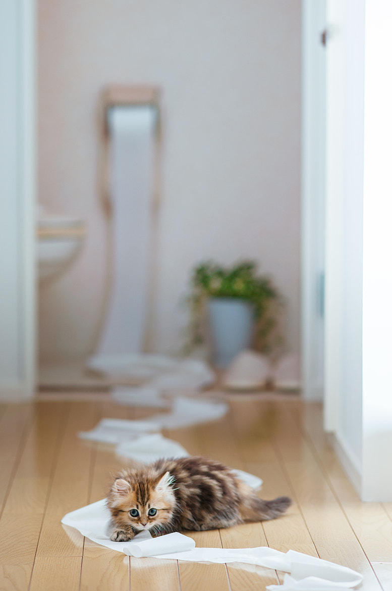 Photograph Toilet Training by Ben Torode on 500px