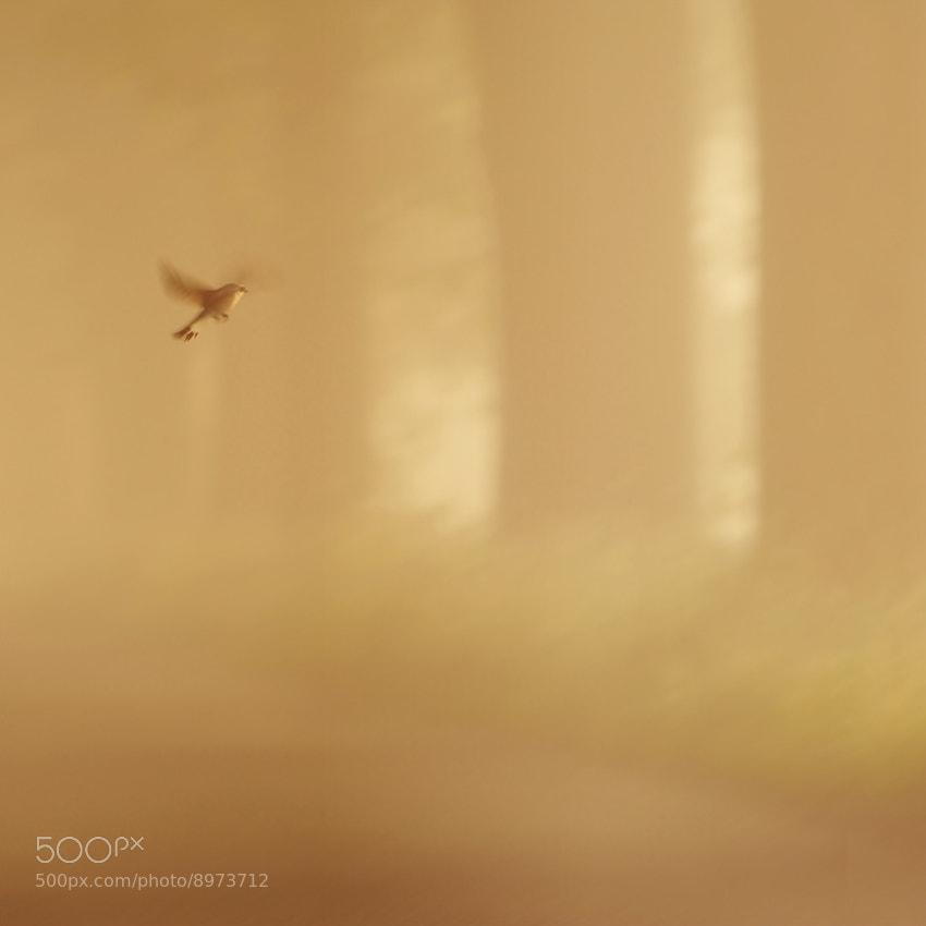 Photograph Emperor's nightingale by Sebastian Luczywo on 500px