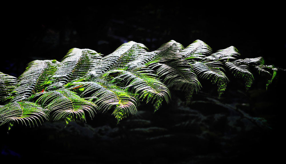 Photograph Light and shadow of leaf #1 . by Jumrus Leartcharoenyong on 500px