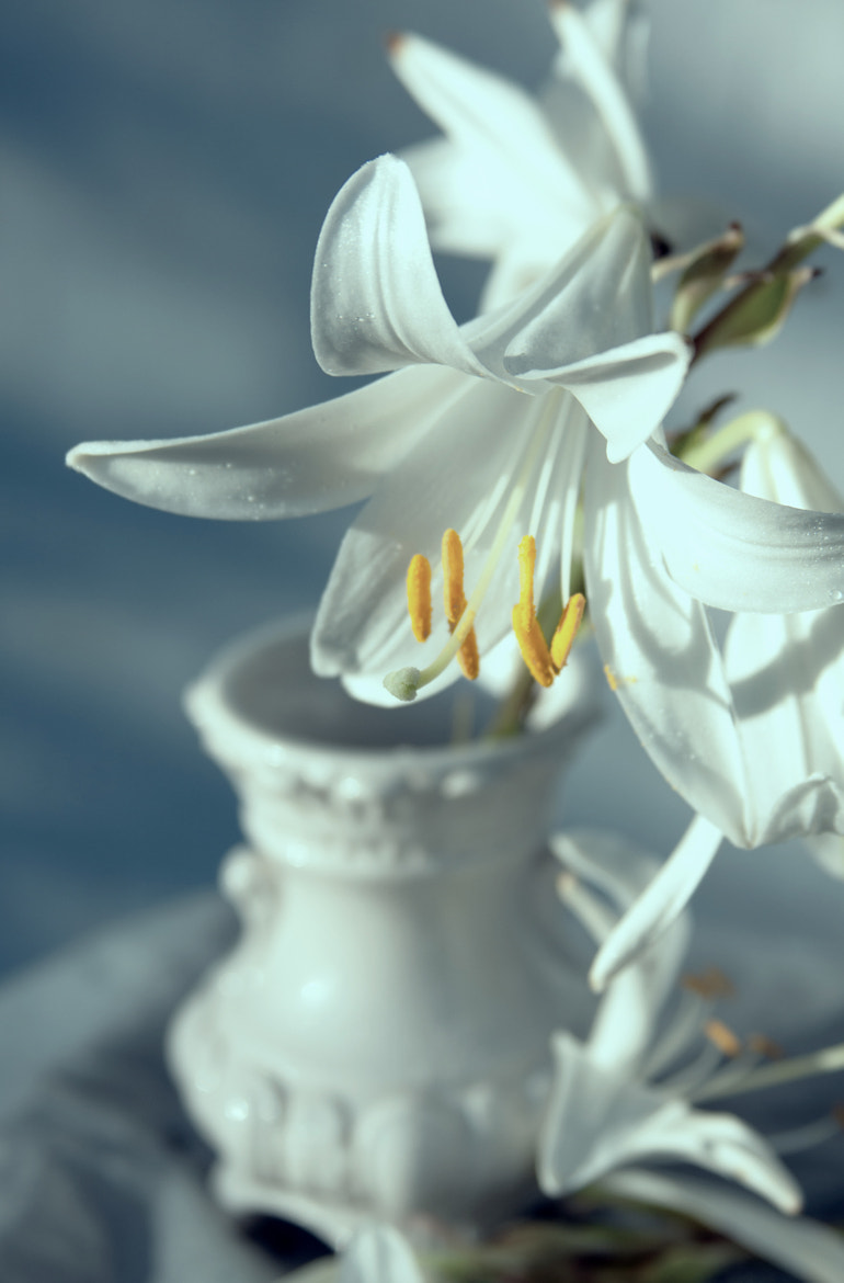 Photograph Lily petals  by Rucsandra Calin on 500px