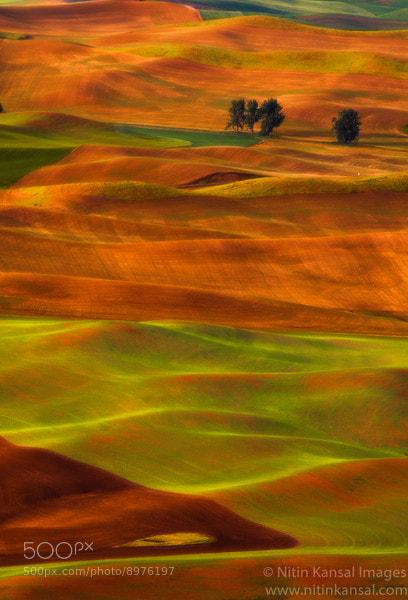 Photograph Golden rolling hills by Nitin Kansal on 500px