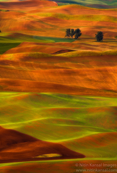 Photograph Golden rolling hills by Nitin Kansal on 500px