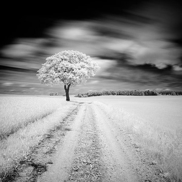 Photograph Alone in the field by Emmanuel Correia on 500px