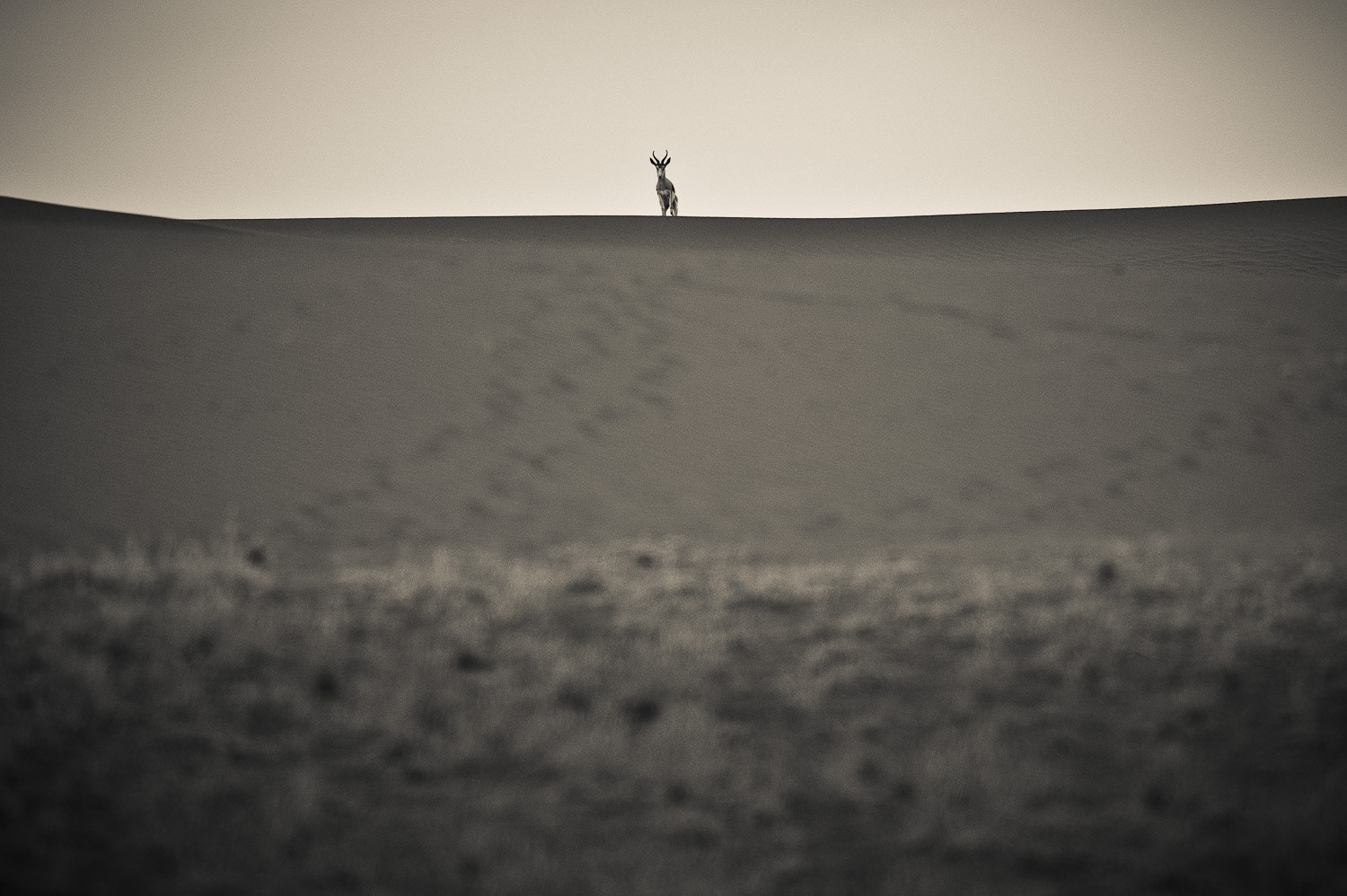 Photograph Lonely traveller by Gorazd Golob on 500px