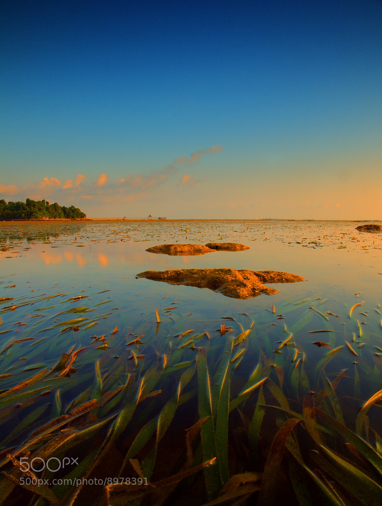 Photograph SEA GRASS by James Duta Aribawana on 500px
