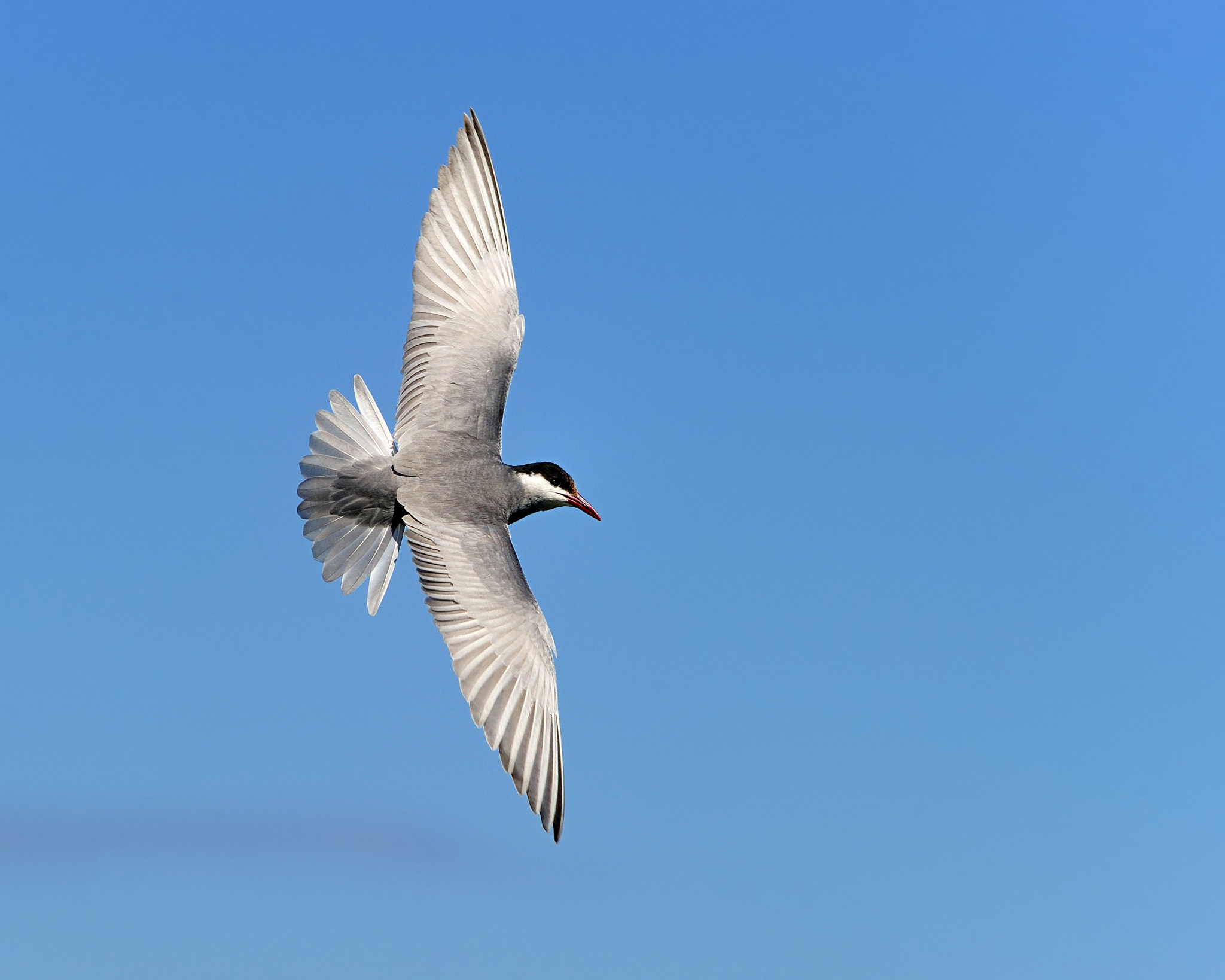 Photograph One Good Tern Deserves Another by Tony Beck on 500px