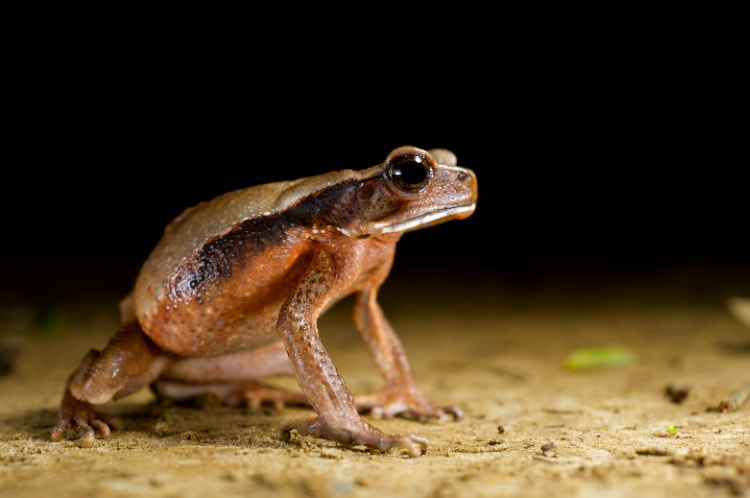 Photograph Spotted Toad by Bert Willaert on 500px