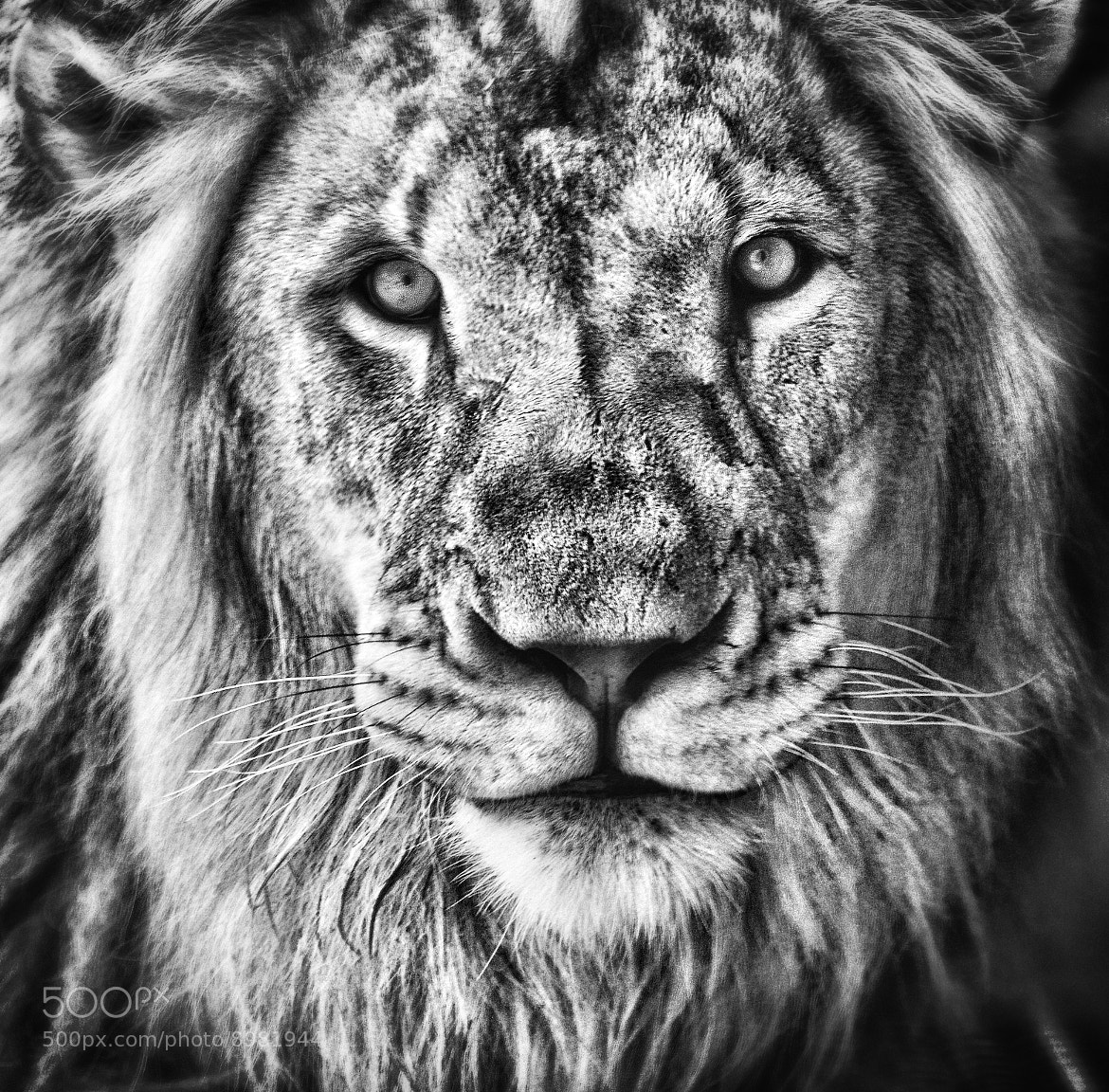 Photograph The King's Portrait by Jeff Clow on 500px