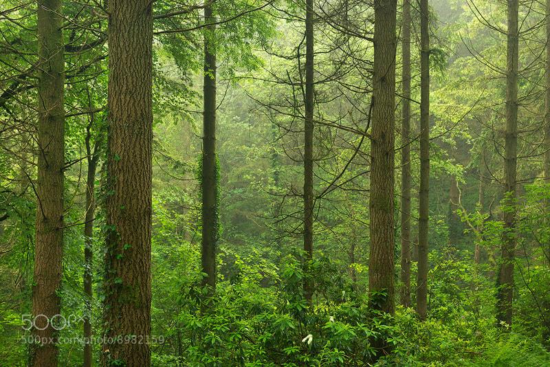 Photograph Summer Woodland by Adam Burton on 500px