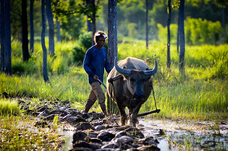 Photograph The farmer by Chanwit Whanset on 500px