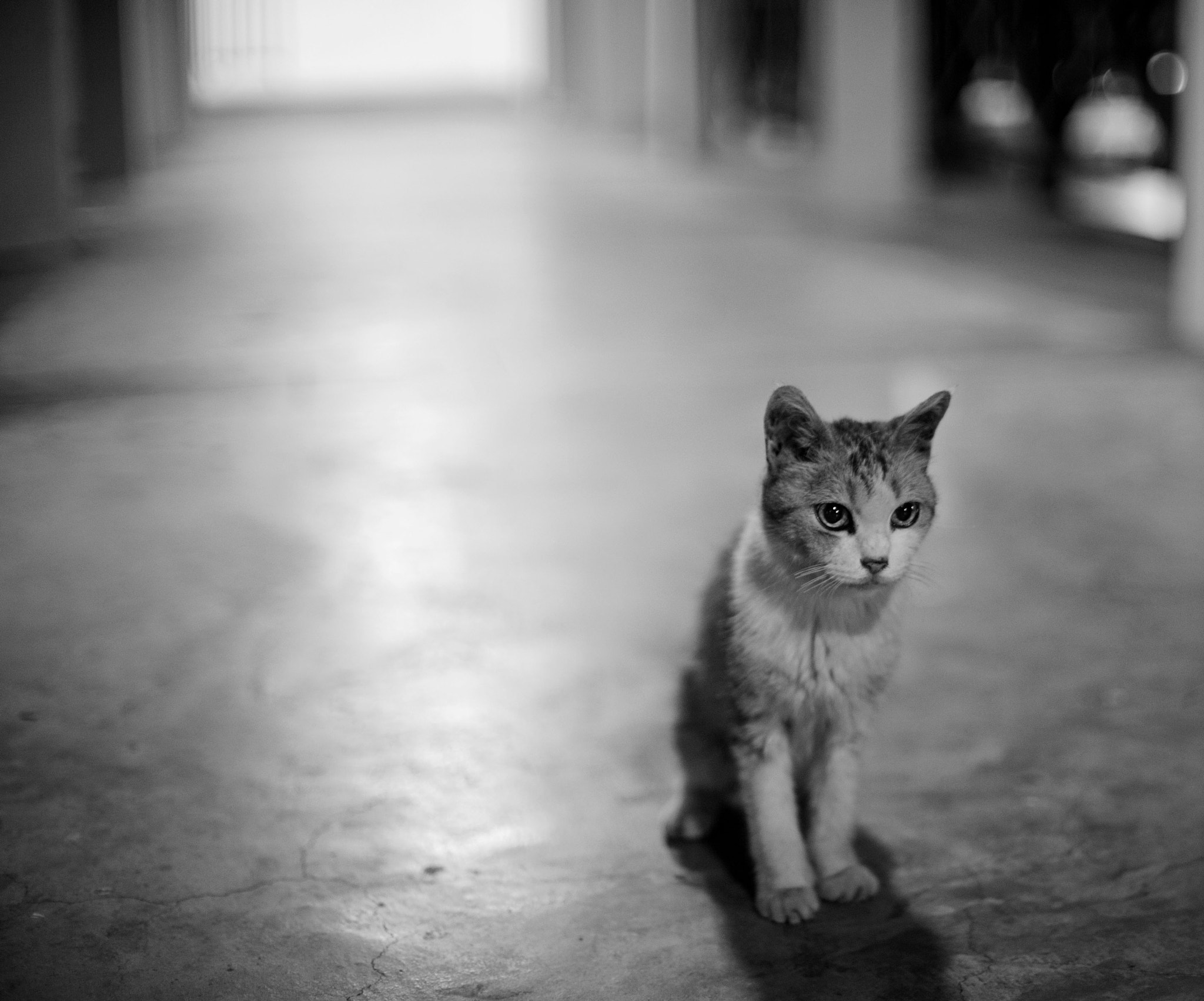 Photograph Late Night Cat by Christopher Chia on 500px