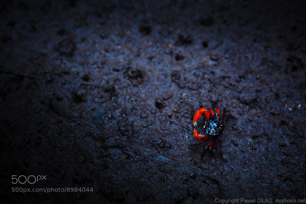 Photograph a dash of colour by Pawel Olas on 500px