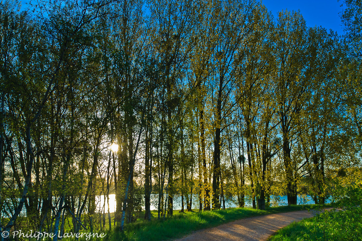 Photograph The curtain of trees by Philippe Lavergne on 500px