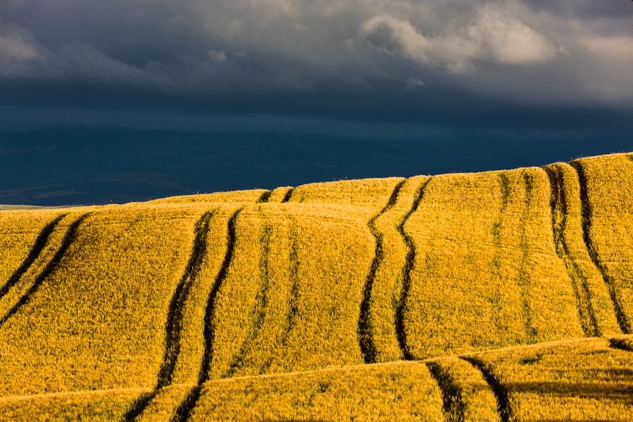 Photograph Tuscan Fields by Hans Kruse on 500px