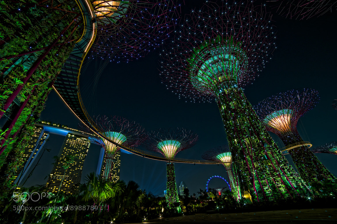 Photograph Super Tree Grove by Edward Tian on 500px