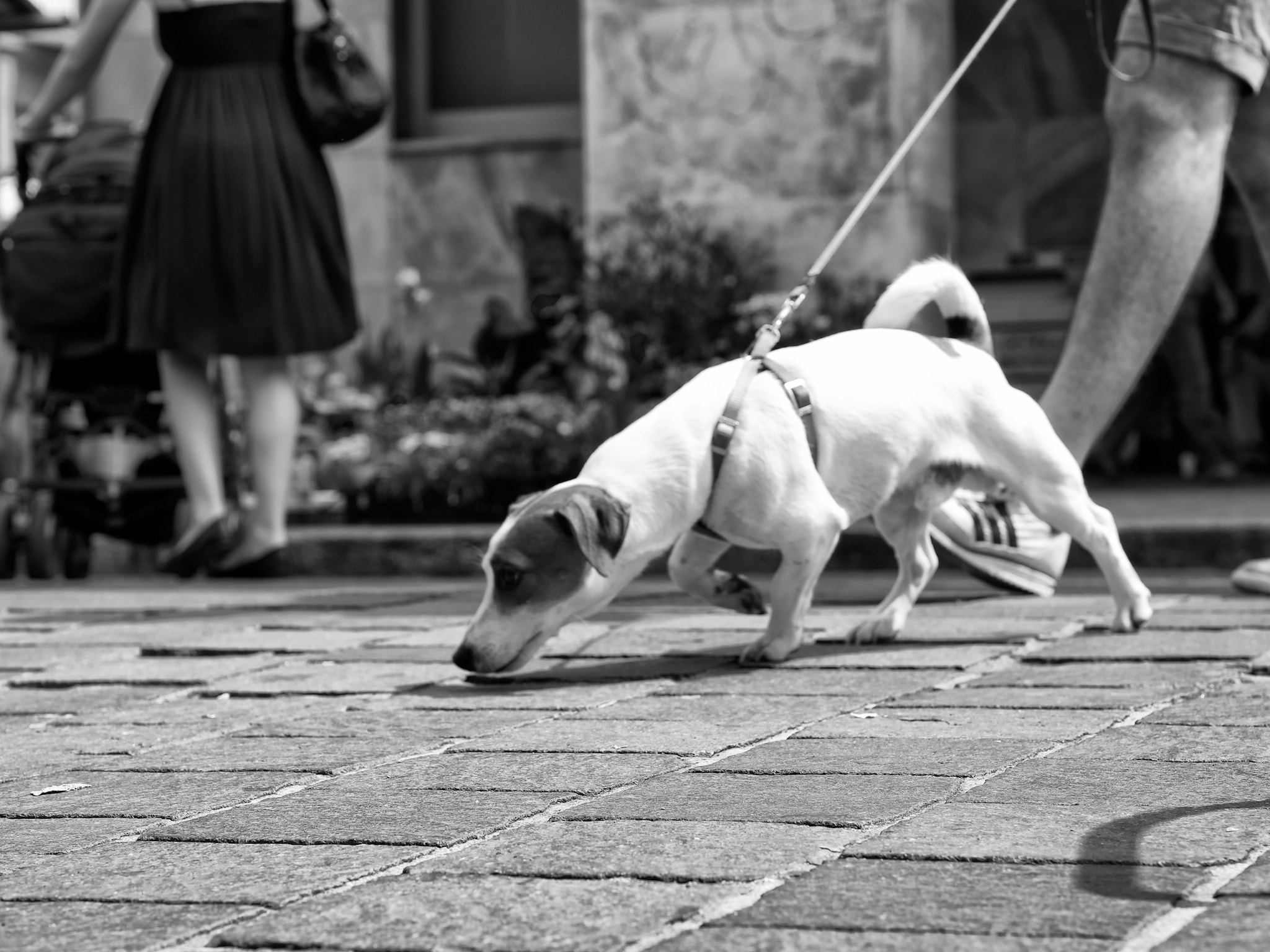 Photograph sniff by Alexander Ess on 500px