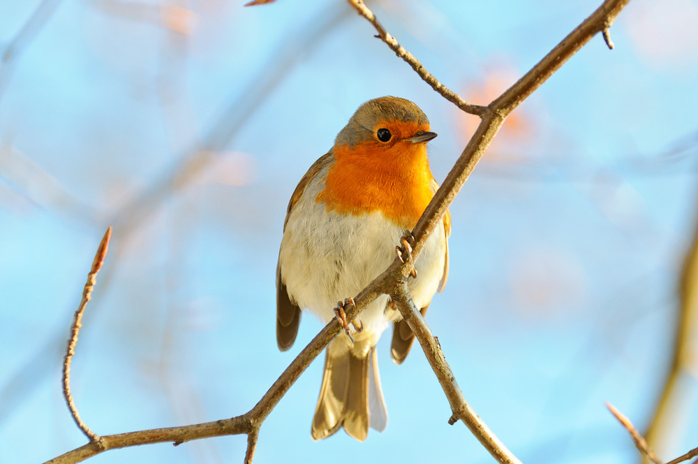 Photograph Robin by Big M on 500px