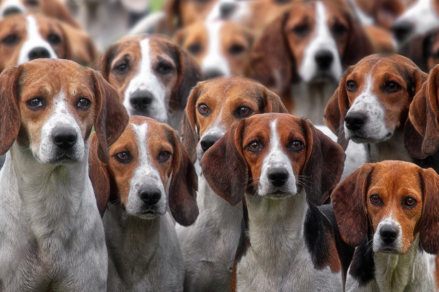 Pack of Hounds by Michael Milfeit on 500px.com