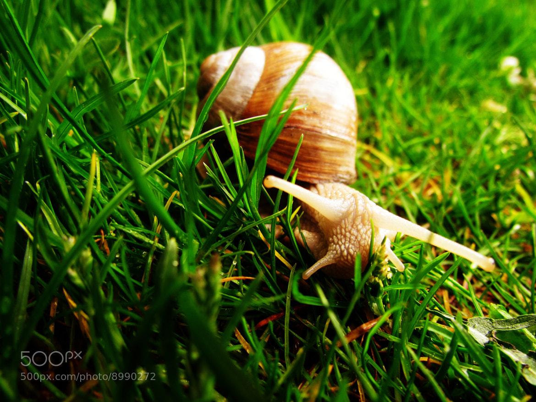 Photograph Snail in the grass by Tomislav Safundžić on 500px