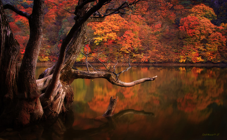 Photograph Autumn lake by Jaewoon U on 500px