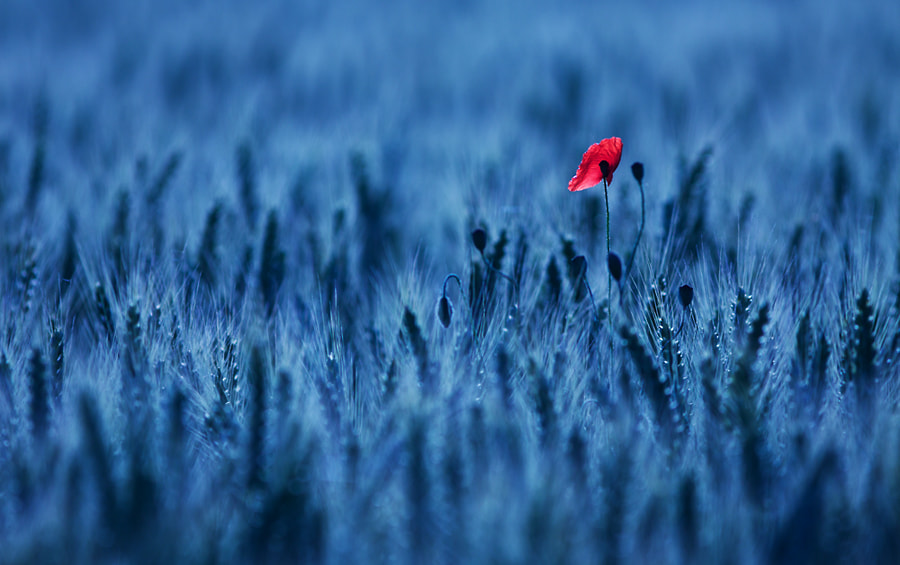 Photograph In blue by mathieu capdeville on 500px