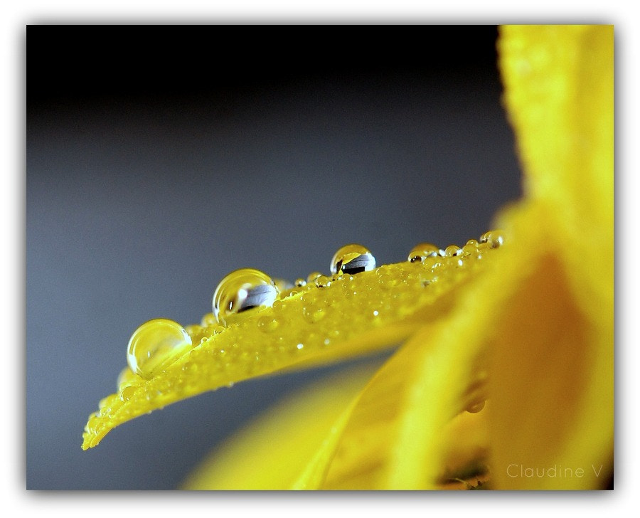 Photograph after the rain... by Claudine V. on 500px
