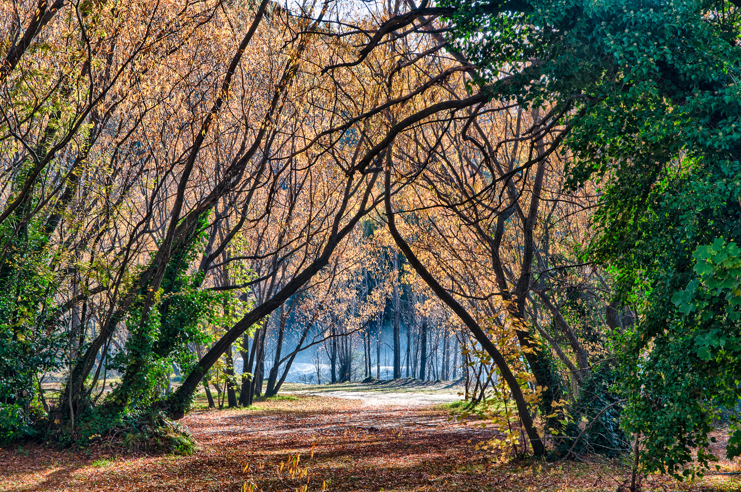 Photograph Arrowtown trees by Martin Tyler on 500px