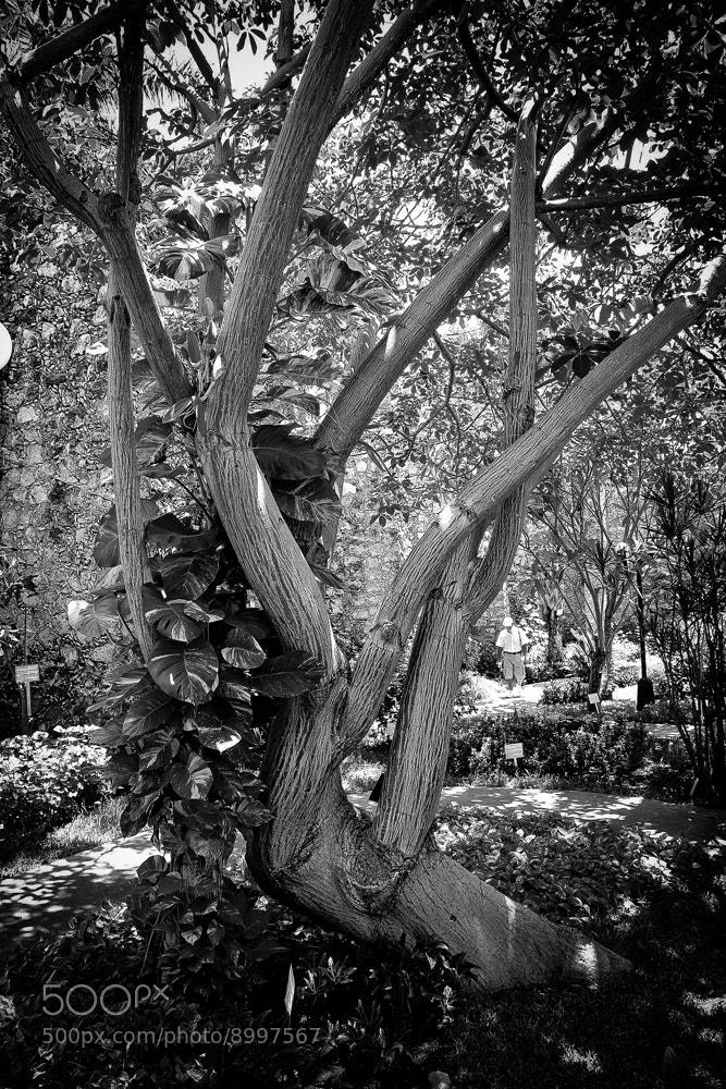 Photograph Arbol by Héctor Barrera Carrera on 500px