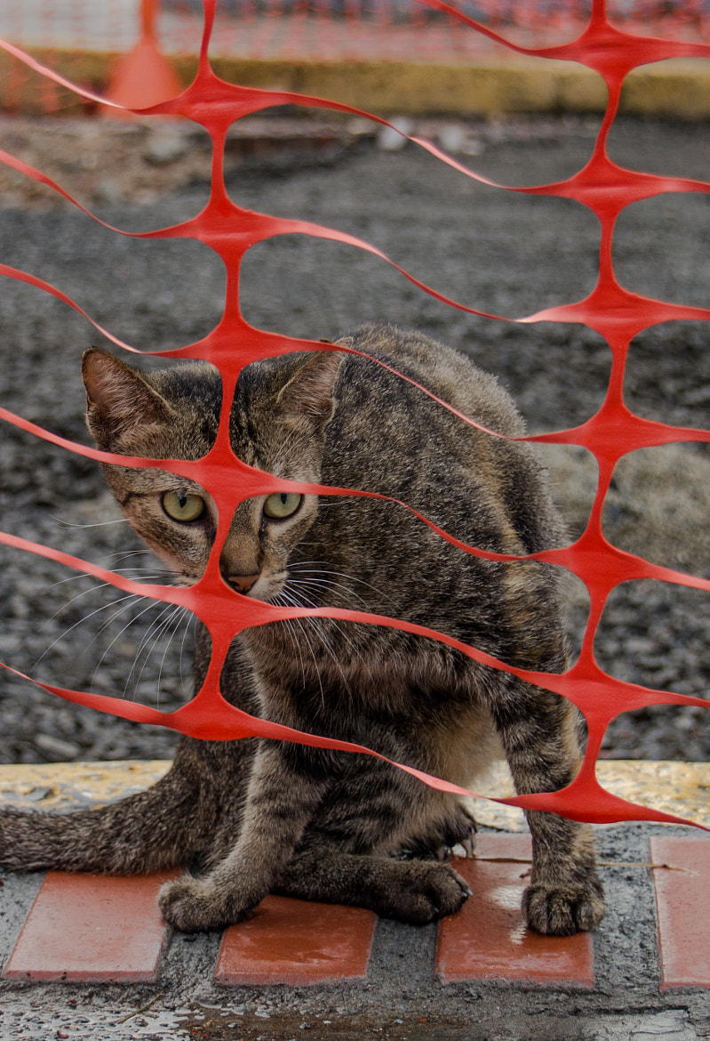 Photograph Street Cat in Panama City by Thomas Marti on 500px