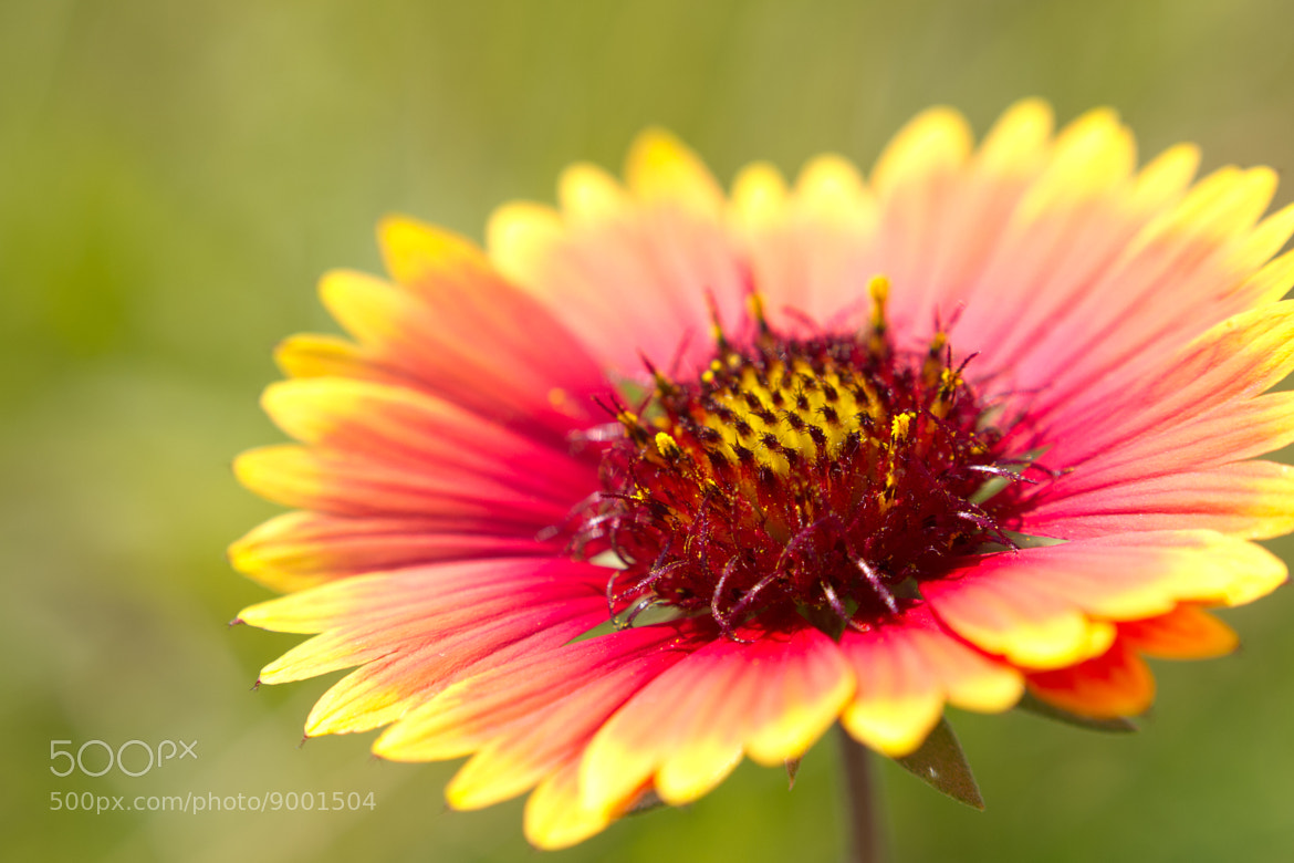 Photograph flower by Yos Kawapon on 500px