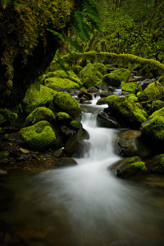 Photograph Moss-Lined Stream by Ned Fenimore on 500px